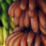 【ミャンマー語旅行】おいしい熱帯フルーツ一覧(ビルマ語果物会話音声つき)